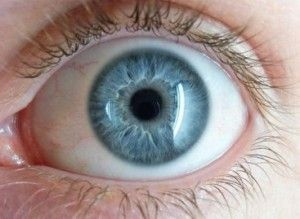 oog droog